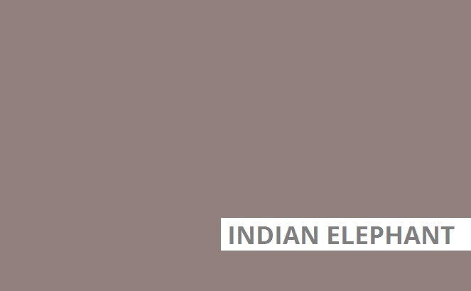 Indiian elephant